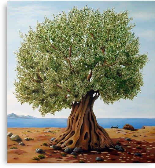 olivenbaum leinwanddrucke von georgia korogiannou