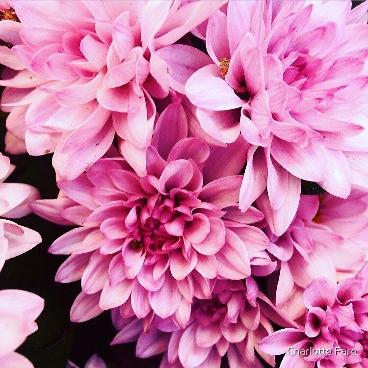 Pink Flowers II by Charlotte Fare