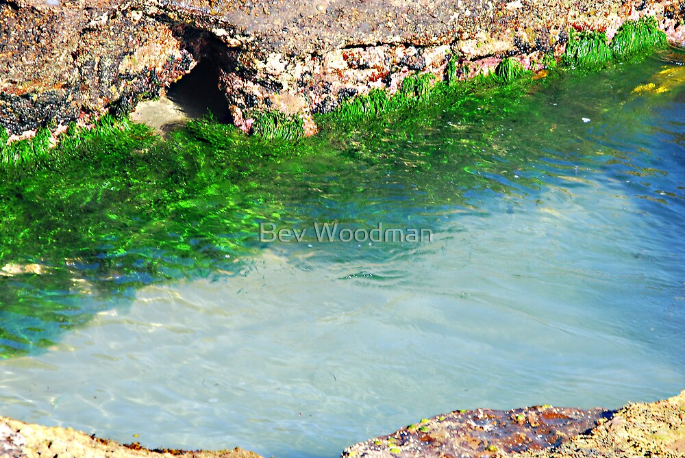 The Rock Pool Forest - Caves Beach by Bev Woodman