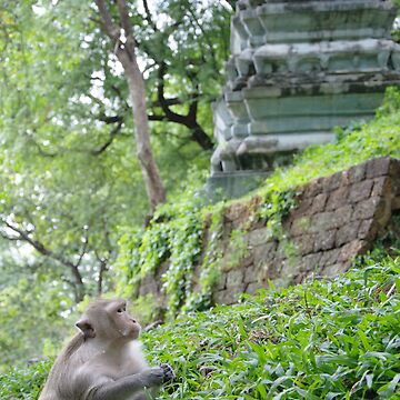 Wat Monkey by FlyAwayPeter