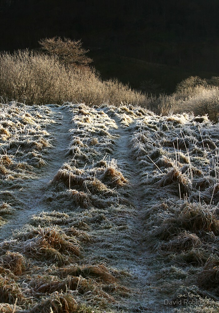 Morning Frost by David Robinson