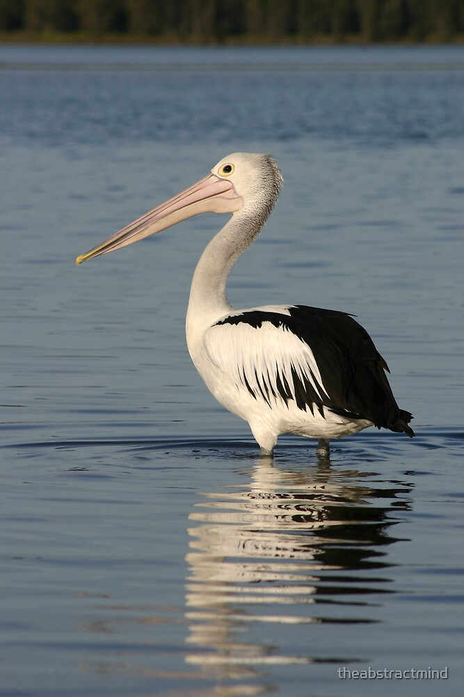 The Pelican by theabstractmind