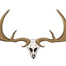 Skull of a deer with horns by Elsbet