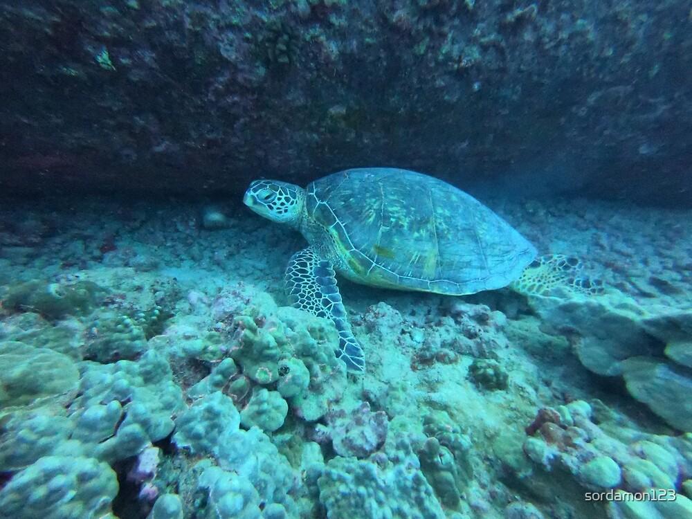Sea Turtle by sordamon123