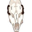 Skull of roe deer by Elsbet