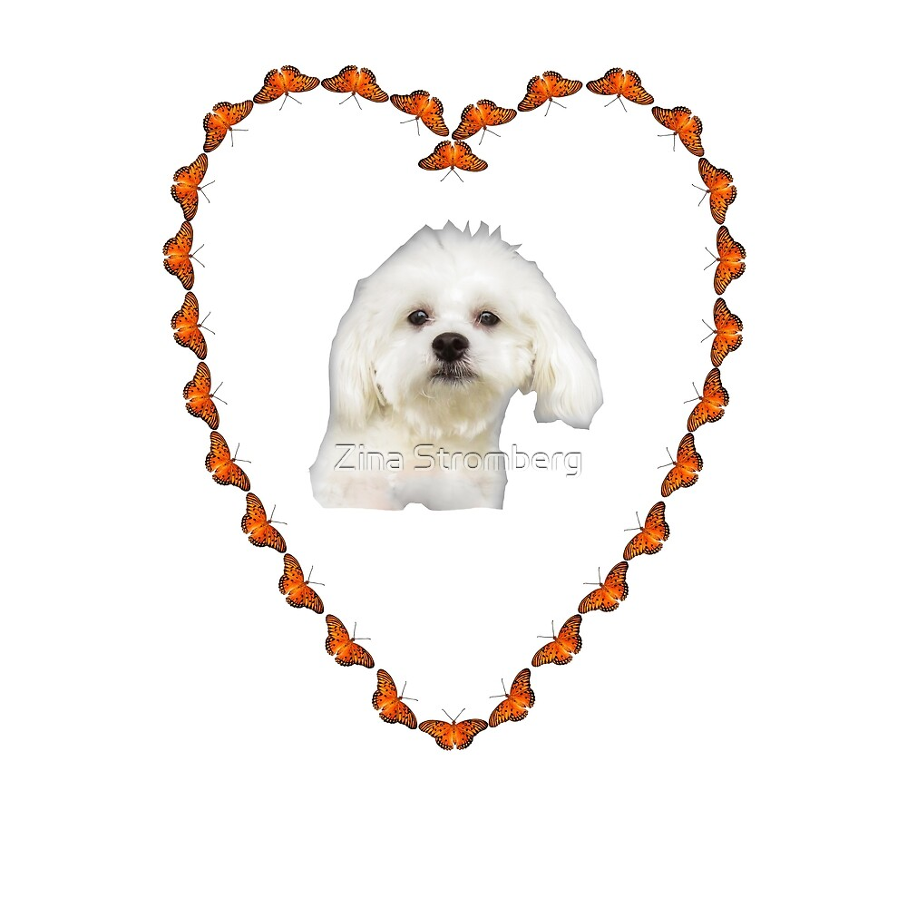 Maltese puppy in heart by Zina Stromberg