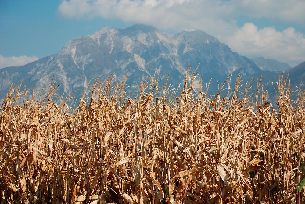Dried Corn Against Mountain  by jojobob