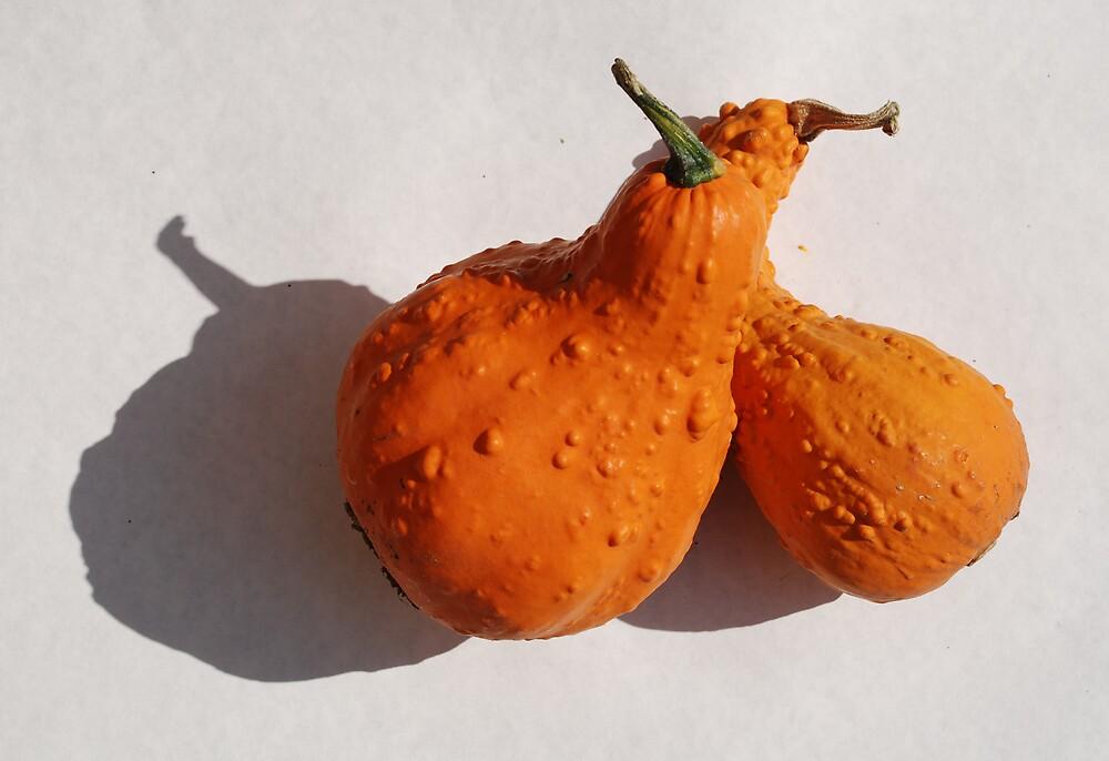 Two Orange Squashes  by jojobob