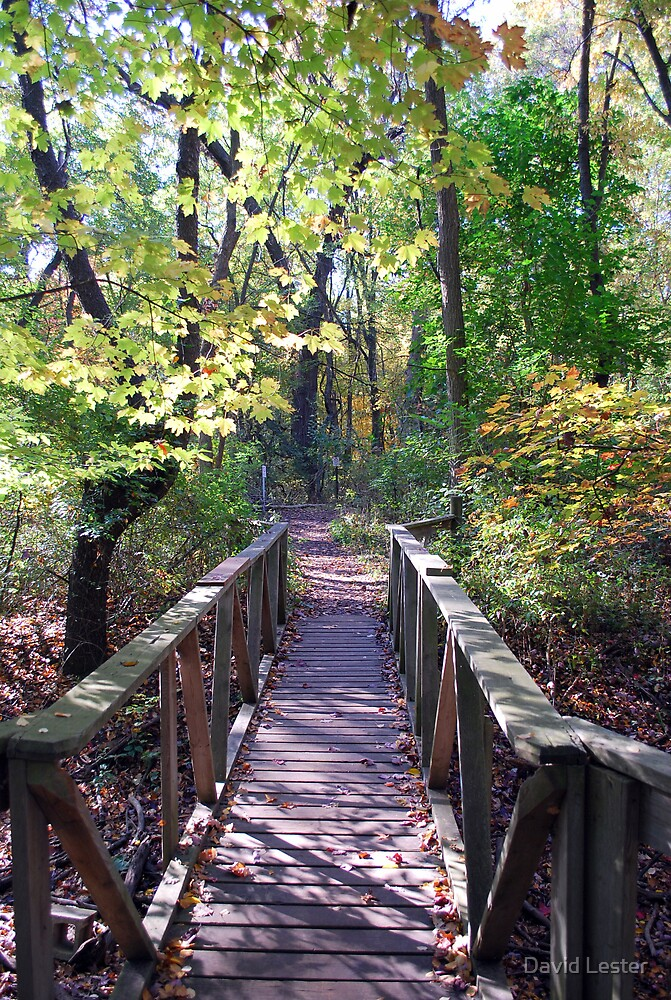 Walk Bridge by David Lester