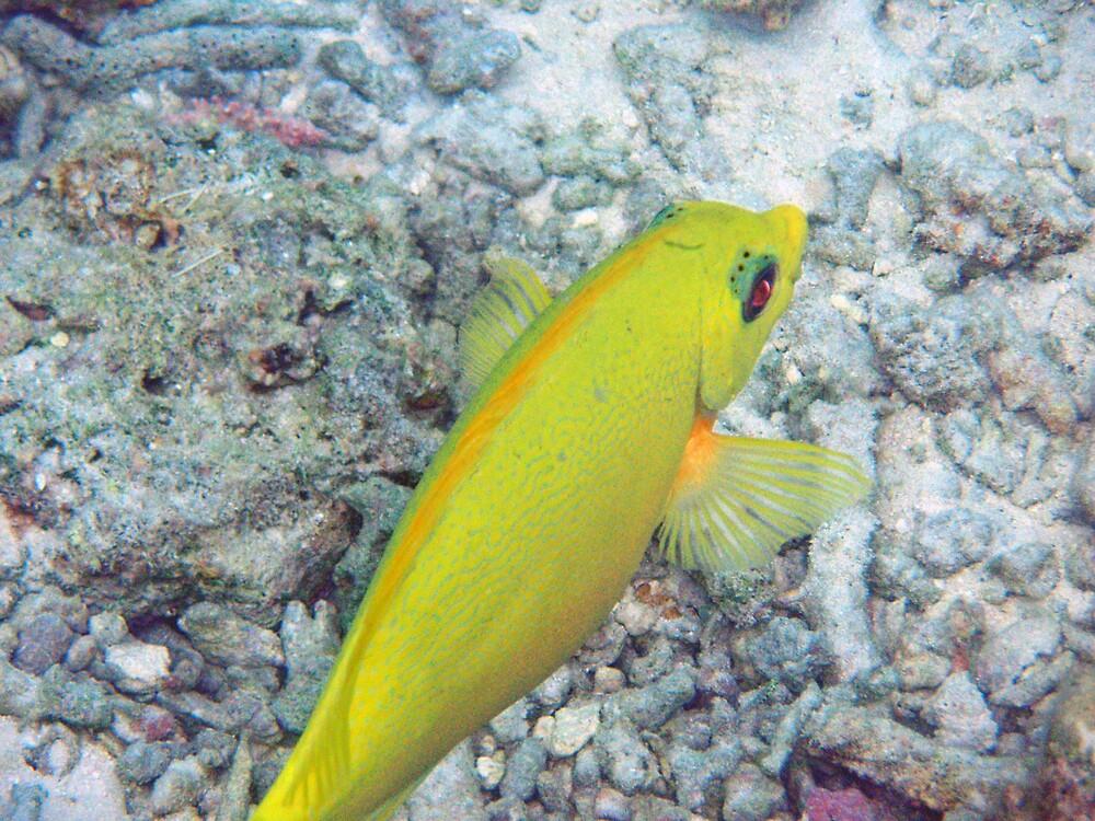 Lemonfish close-up by presbi