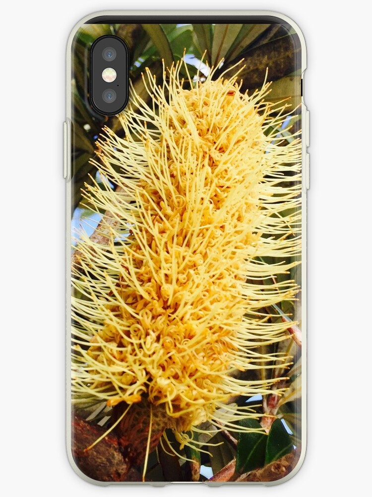 Yellow Banksia by BindysBags