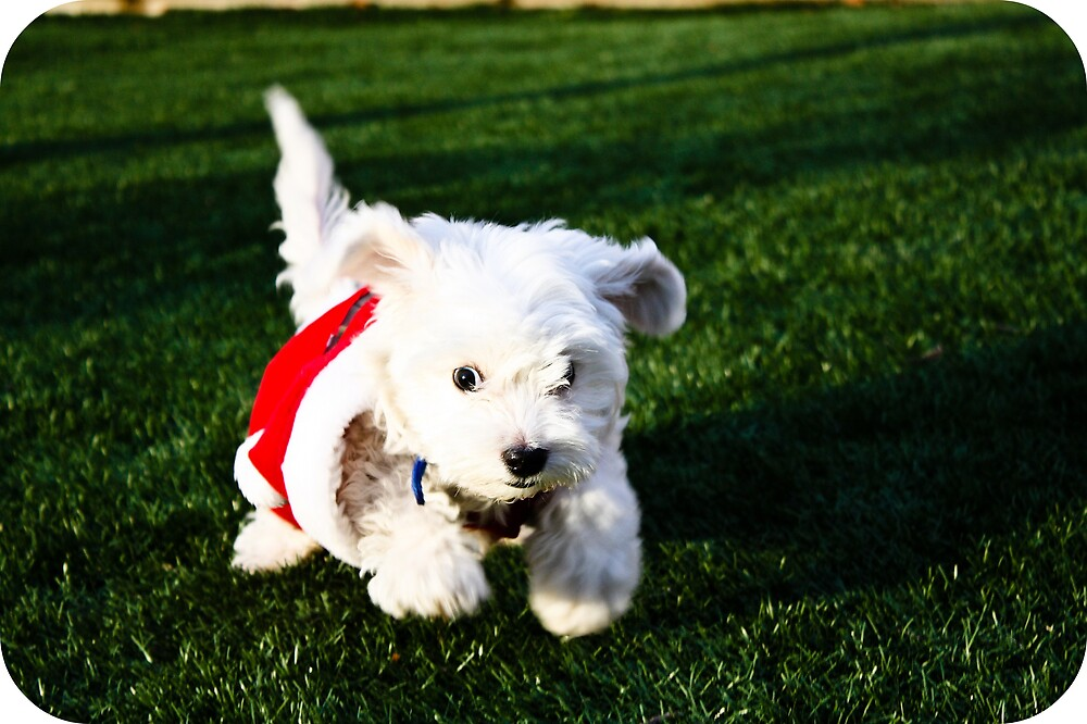 snowball in a santa suit by tinytina