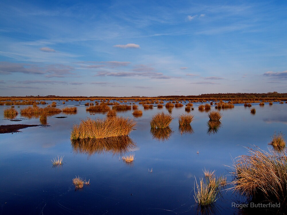 Thorne Moors by Roger Butterfield