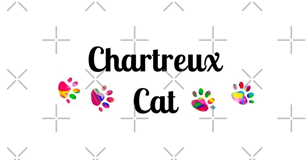 Chartreux cat -  star quality by myfavourite8