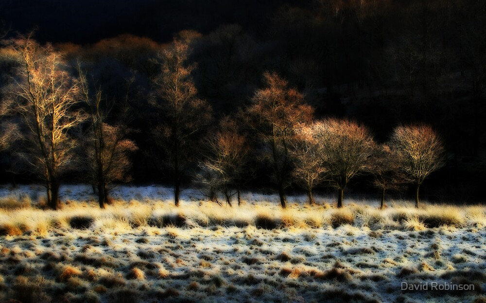 Cold trees by David Robinson