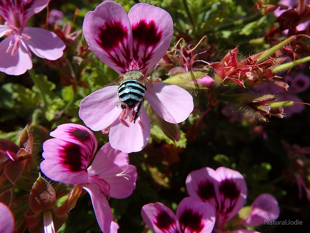 Blue Bee by NaturalJodie