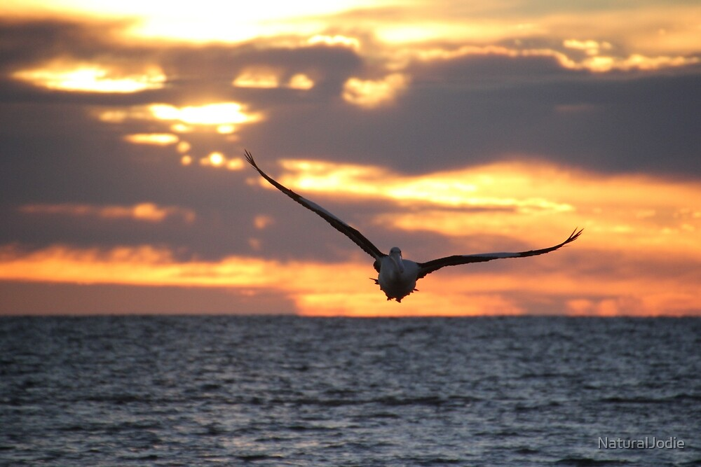Pelican at Sunrise by NaturalJodie