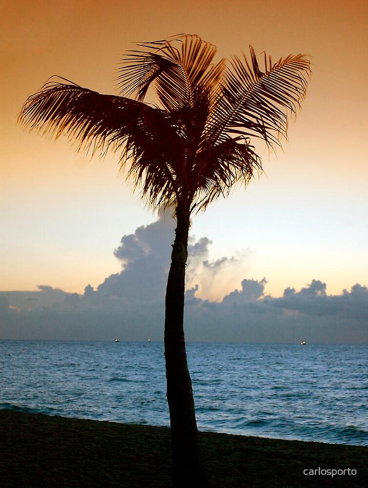 Coconut Tree by carlosporto