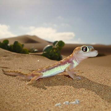 Gecko on Desert Dune - Namibia by AStevensAdmin