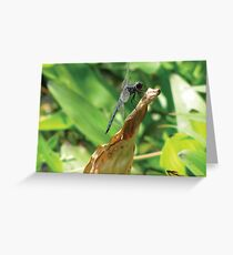 Beautiful Dragonfly Greeting Card