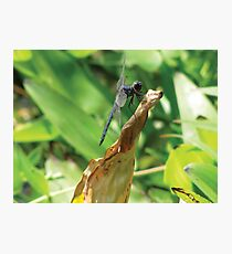 Beautiful Dragonfly Photographic Print