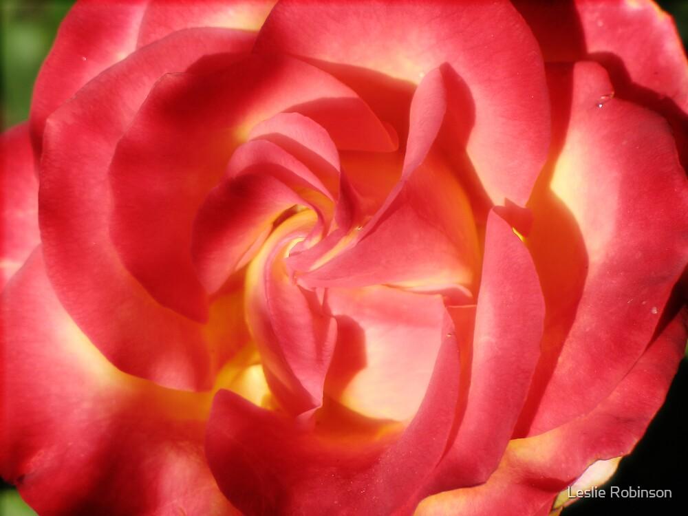 Macro Rose 1 by Leslie Robinson
