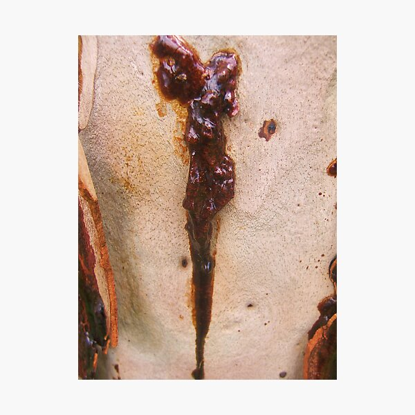 Stigmata tree Photographic Print