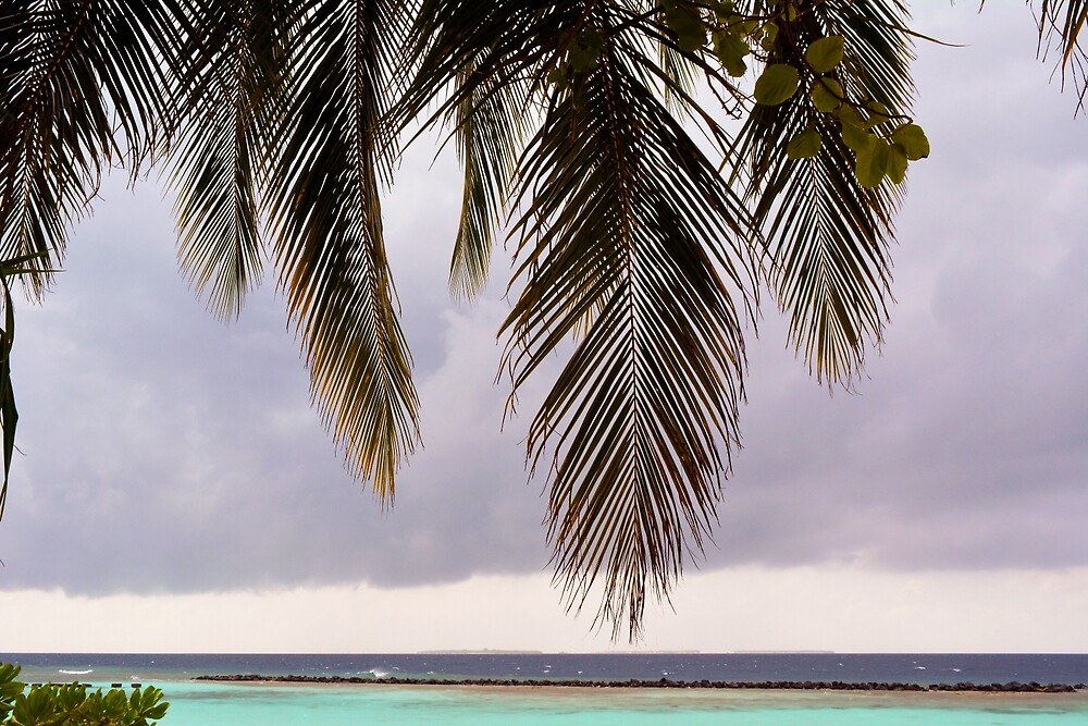 Palm tree leaves at the beach by oanaunciuleanu