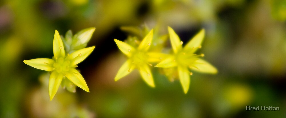 Tiny Flowers In A Row by Brad Holton