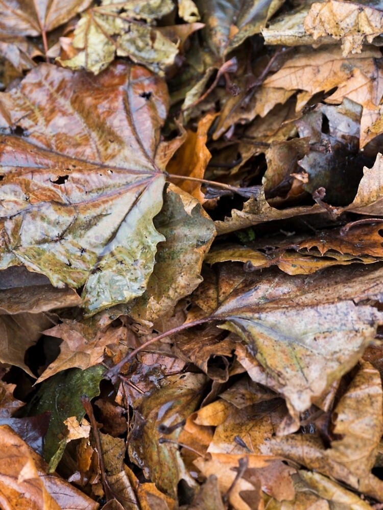 Autumn Leaves a Bunch by textural