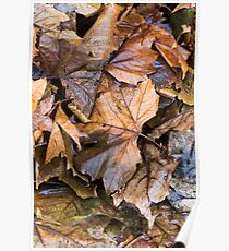 Autumn Leaves a Bunch - Alternative Poster