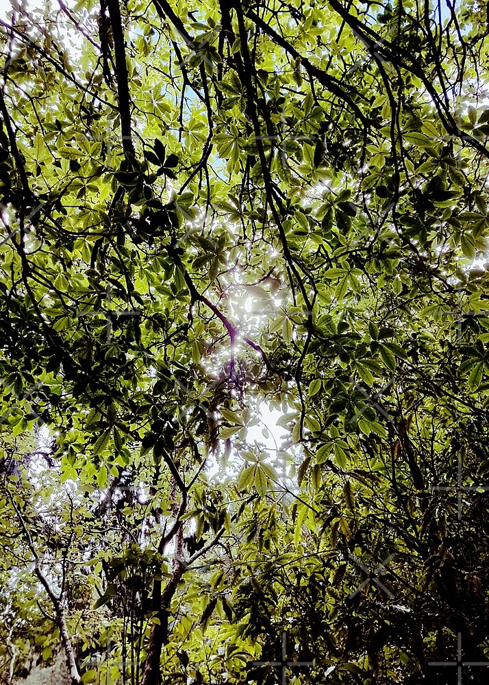 Sun through the leaves by Peter Chown