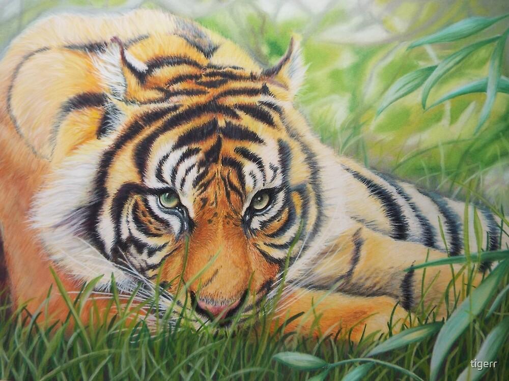 Watchful Tiger by tigerr