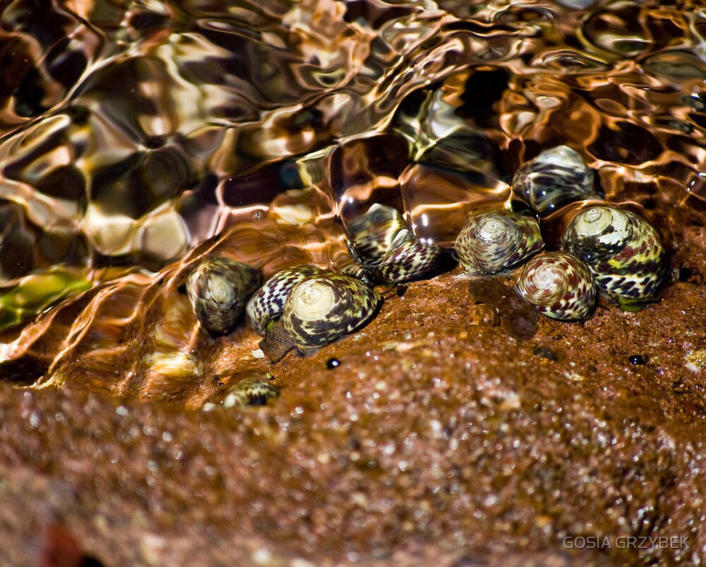 Snails in the water - Mediterranean by GOSIA GRZYBEK