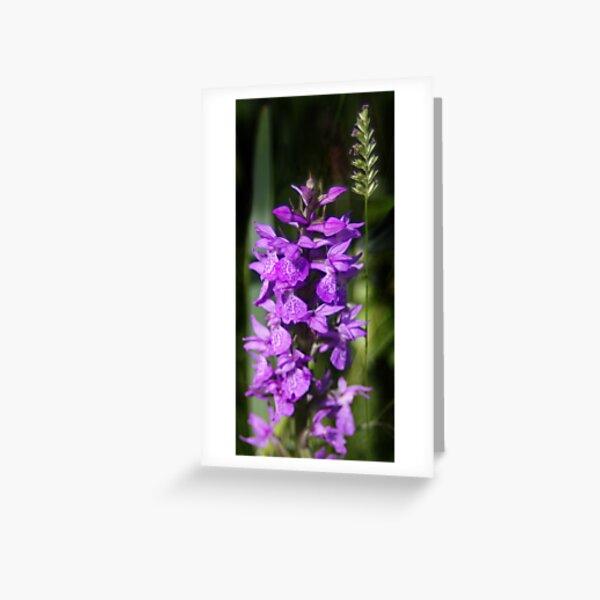 Hidden Beauty Greeting Card