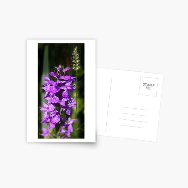 Hidden Beauty Postcard