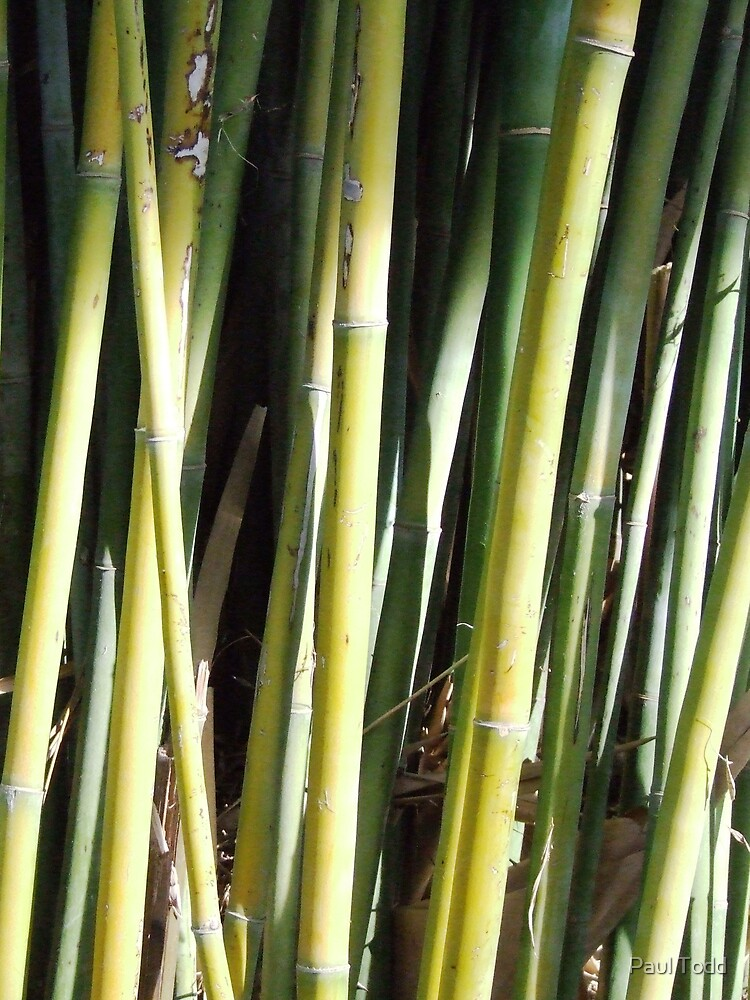 Bamboo 2 by Paul Todd