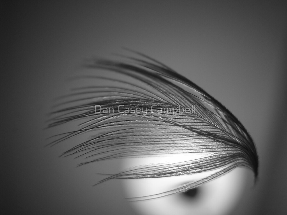 Eye of Gray by Dan Casey Campbell