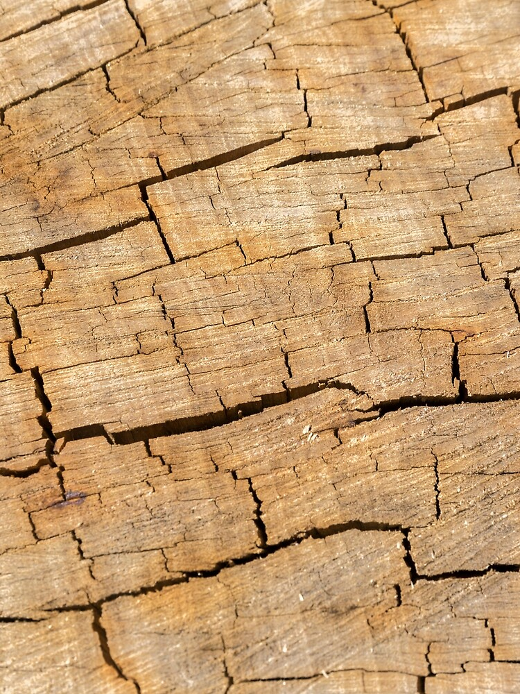 Shattered Wooden Log - Alternative by textural