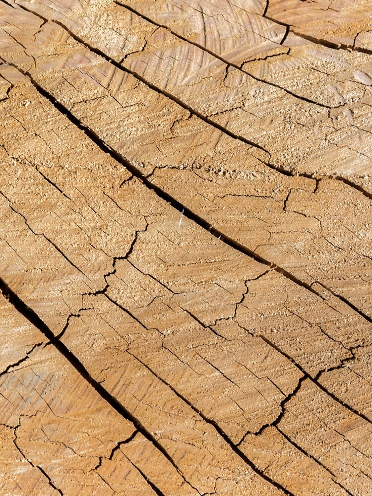 Shattered Wooden Log - Alternative III by textural
