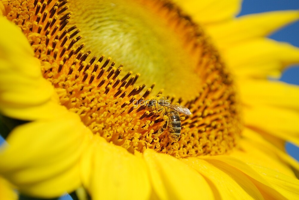 Summer scene with bee on a sunflower by goceris
