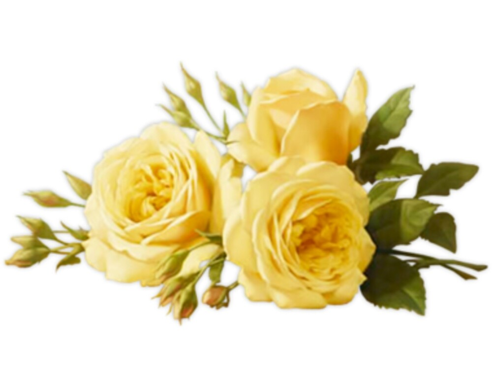 yellow flowers by houndbabey