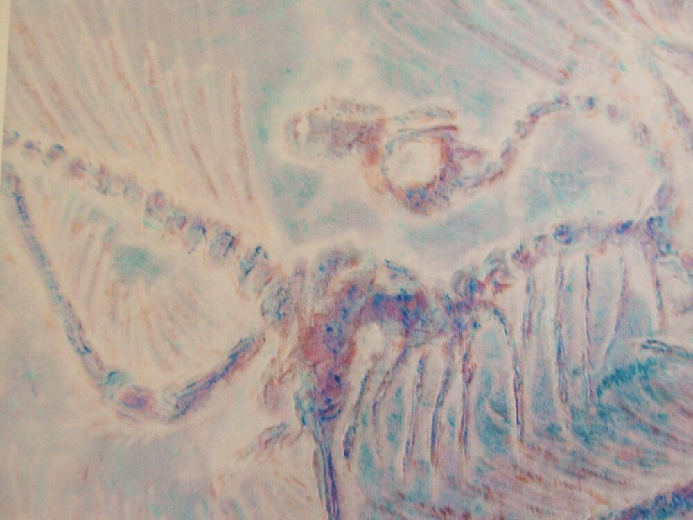 archaeopteryx inverted by Age180