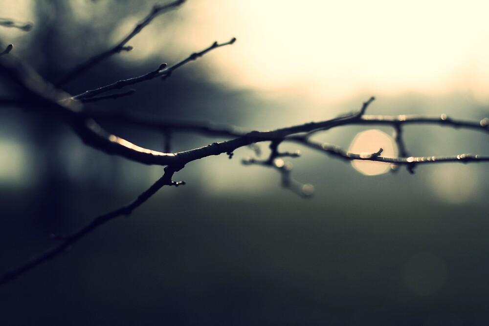 Winter Light by ShereenM