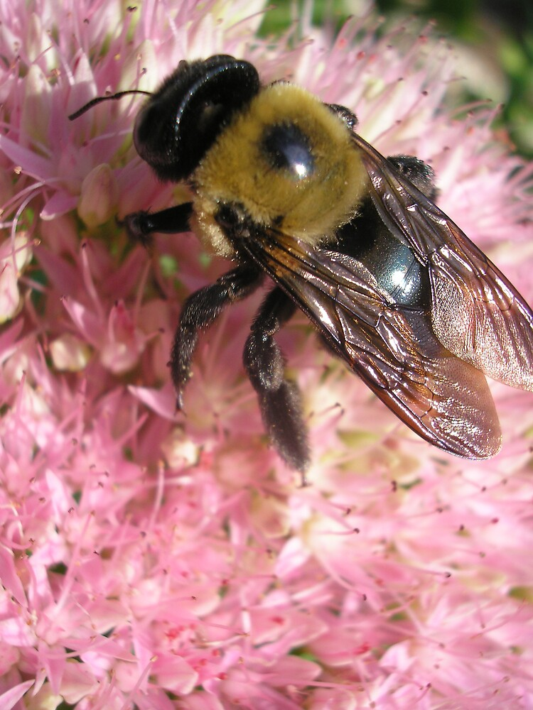 WHY I LIKE BEES by PASSIONATE PLANET