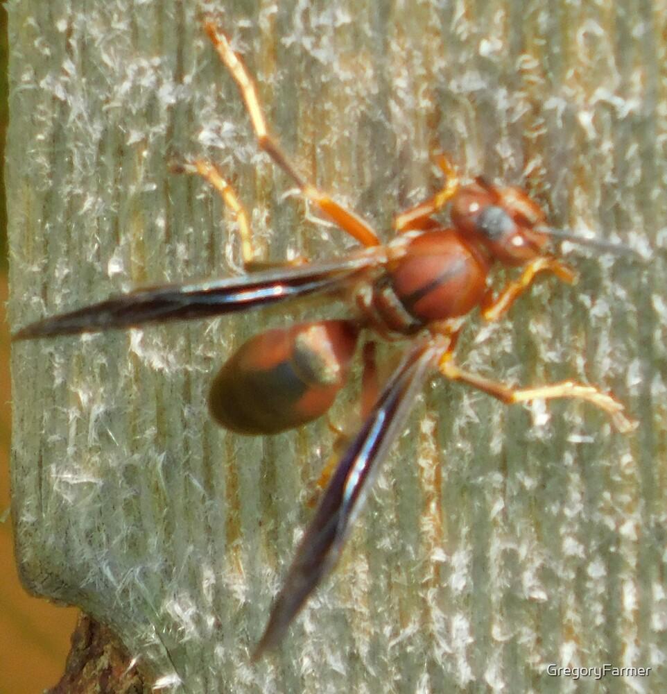 Wasp Watcher by GregoryFarmer