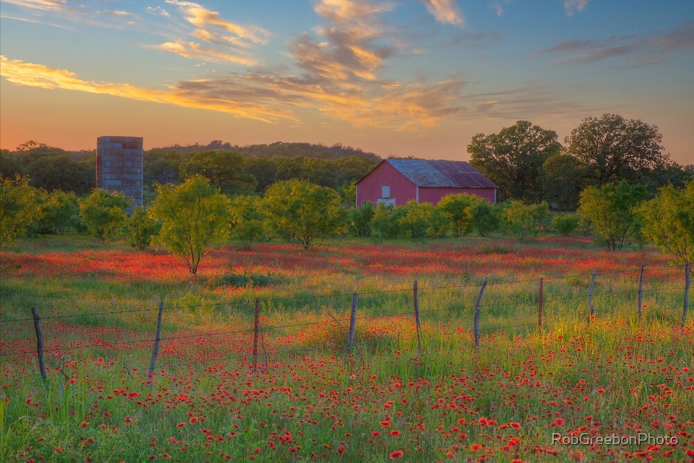 Texas Wildflower Evening in Red 2 by RobGreebonPhoto