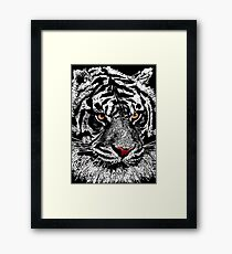 White albino tiger Framed Print