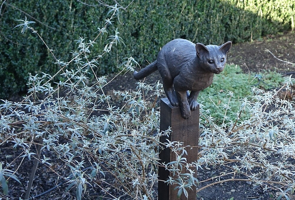 Cat on post by frogs123