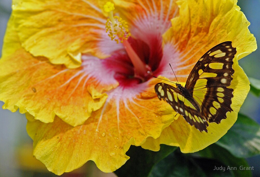 Butterflies are Flying Flowers  by Judy Grant